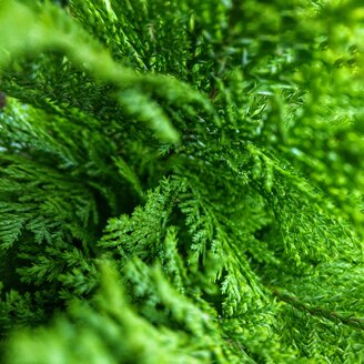 Plant, Details, Green, Berlin, Germany - NGF00450