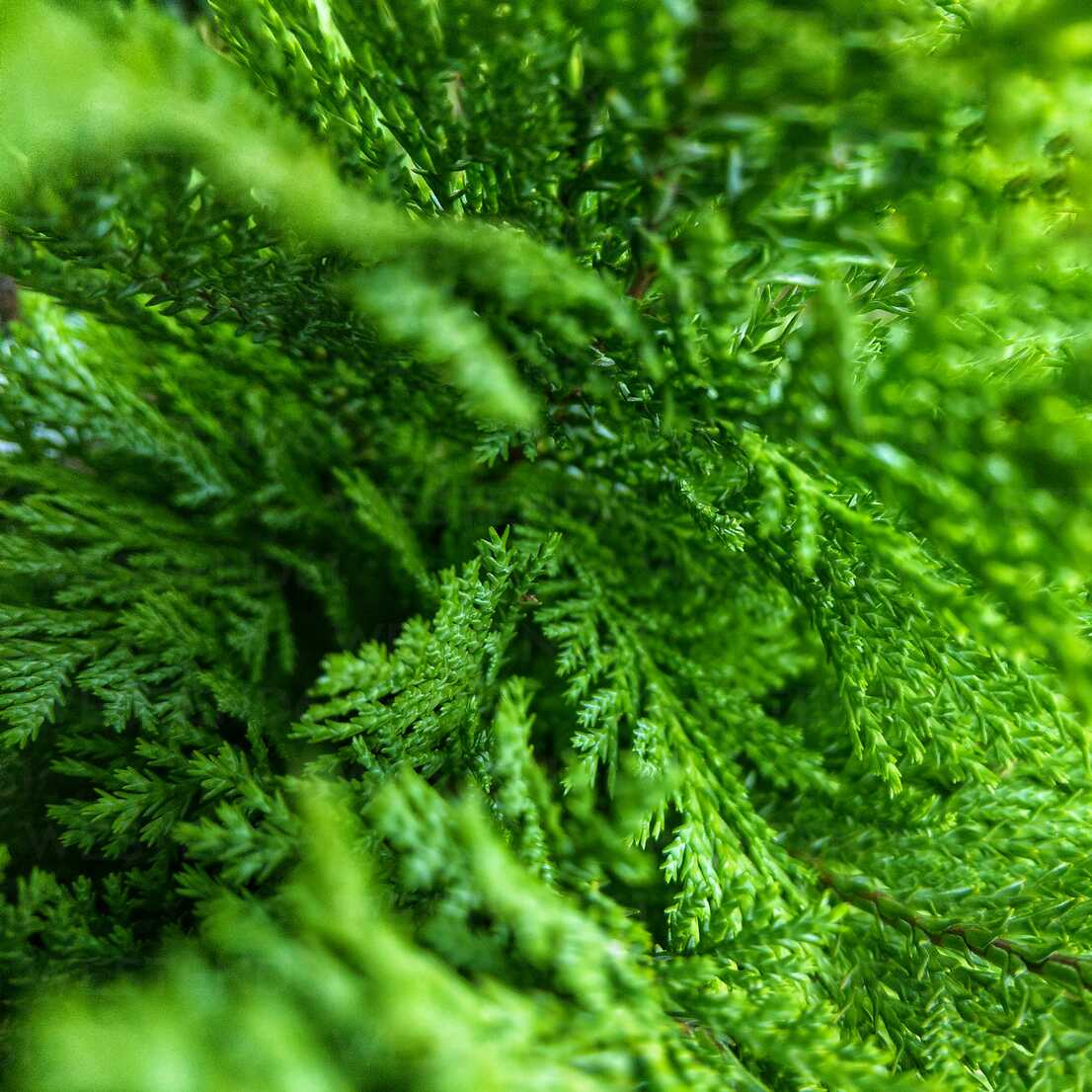 Plant, Details, Green, Berlin, Germany - NGF00450 - Nadine Ginzel/Westend61