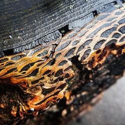 wet bark, Berlin, Germany - NGF00459