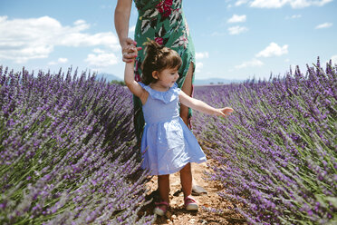 France, Provence, Valensole plateau, Mother and daughter walking among lavender fields in the summer - GEMF02120