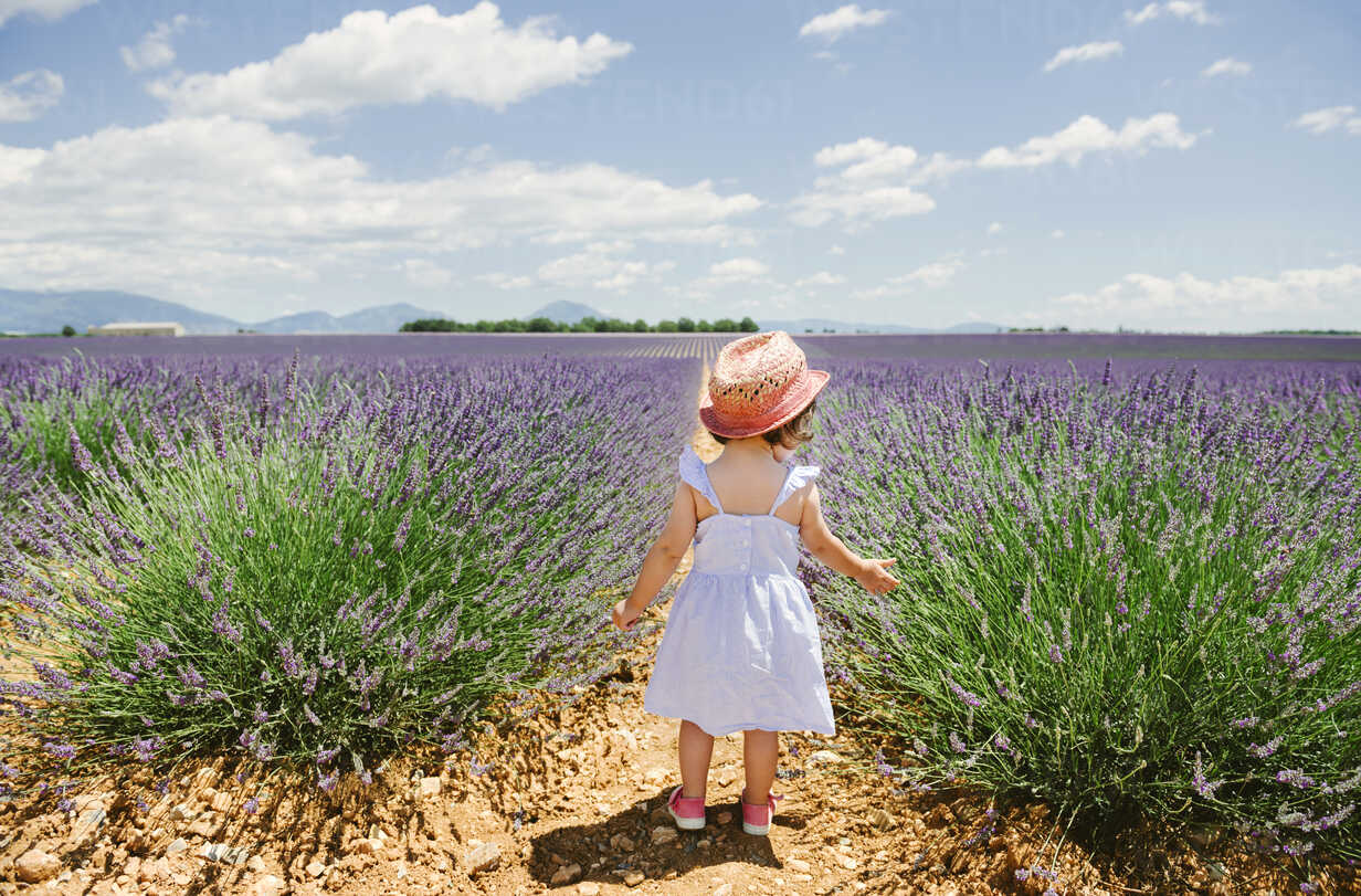 France, Provence, Valensole plateau, rear view of toddler girl standing in purple lavender fields in the summer - GEMF02138 - Gemma Ferrando/Westend61