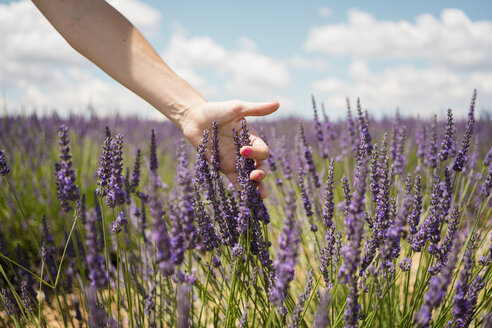 France, Provence, woman touching lavender bloosoms in field in the summer - GEMF02156