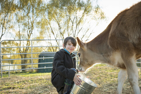 A young boy feeding a calf by bucket in a paddock at an sanctuary. - MINF00143