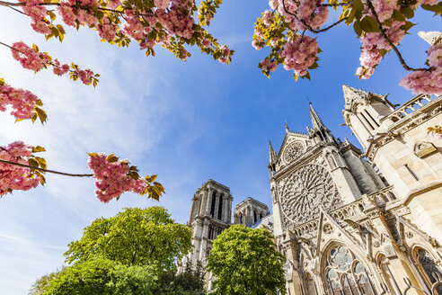 France, Paris, Notre Dame church in spring - WDF04703