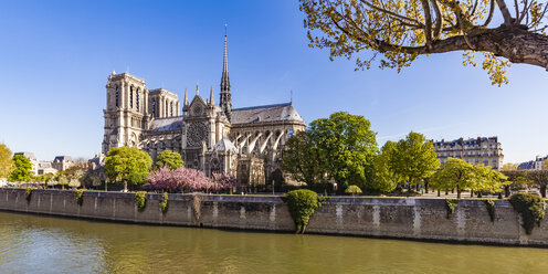 France, Paris, Notre Dame Cathedral at cherry blossom - WDF04727