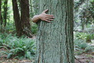 Man hugging tree in lush, green forest - MINF00734