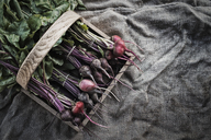 Organic Assorted Beets with stems just harvested - MINF00857