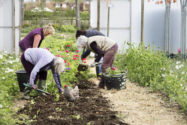Four people, women working in a poly tunnel clearing plants from the soil. - MINF01676