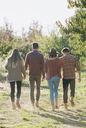 Apple orchard. Two couples walking along a path. - MINF02289