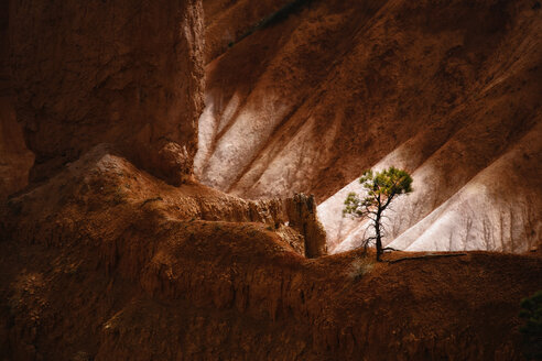The landscape of Bryce Canyon, with deep valleys and ridges. A single tree. - MINF02658