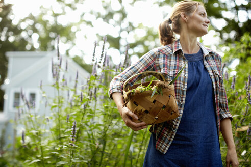 A woman carrying a full basket of fresh picked corn on the cob, and vegetables from the garden. - MINF02776