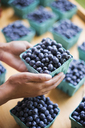Organic fruit displayed on a farm stand. Blueberries in punnets. - MINF02790