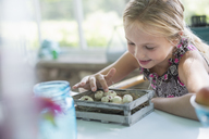 A young girl in a floral dress, examining a clutch of speckled bird eggs in a box. - MINF02859