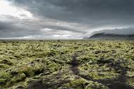 Iceland, Kirkjubaejarklaustur, Dverghamrar, Field of lava overgrown with moss - DMOF00065