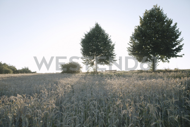 Germany, wheat field and trees at evening twilight - KMKF00427 - Katharina Mikhrin/Westend61