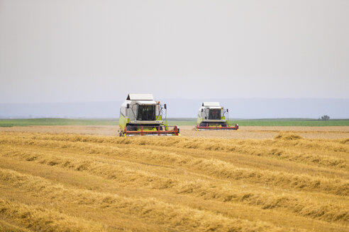 Serbia, Vojvodina, Combine harvesting wheat fields - NOF00063