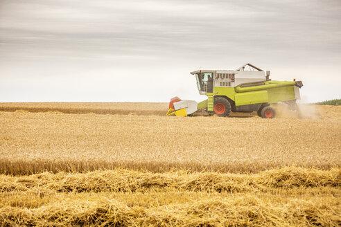 Serbia, Vojvodina, Combine harvesting wheat field - NOF00066