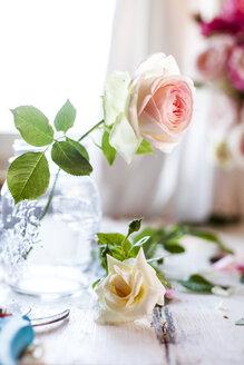 Rose in vase - SBDF03689