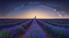 France, Alpes-de-Haute-Provence, Valensole, lavender field under milky way - RPSF00193