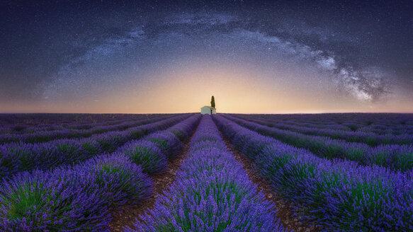 France, Alpes-de-Haute-Provence, Valensole, lavender field under milky way - RPSF00193