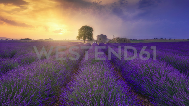 France, Alpes-de-Haute-Provence, Valensole, lavender field at twilight - RPSF00196 - Raul Podadera Sanz/Westend61