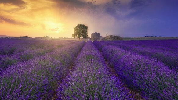 France, Alpes-de-Haute-Provence, Valensole, lavender field at twilight - RPSF00196