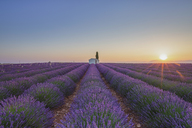 France, Alpes-de-Haute-Provence, Valensole, lavender field at twilight - RPSF00199