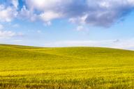 Spain, Andalucia, fields of barley near to Alhama de Granada - SMAF01114