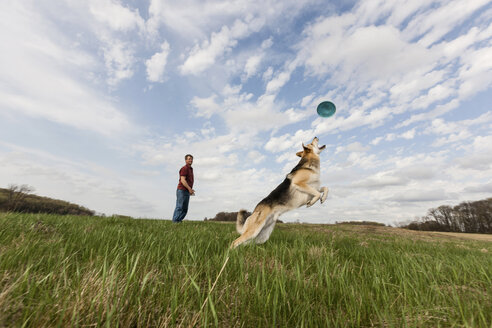 Alsatian dog jumping to catch frisbee - ISF18167
