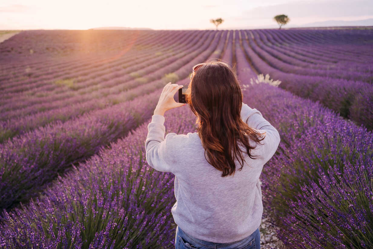 France, Valensole, back view of woman taking photo of lavender field at sunset - GEMF02217 - Gemma Ferrando/Westend61