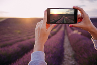 France, Valensole, woman's hands taking photo of lavender field at sunset - GEMF02220