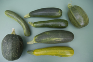 Eight ball squashes and courgettes - GISF00361