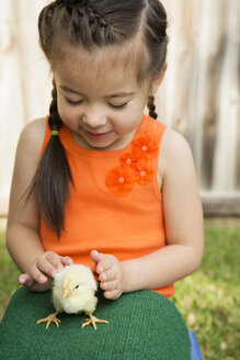 A child with a baby chick on her lap. - MINF02998