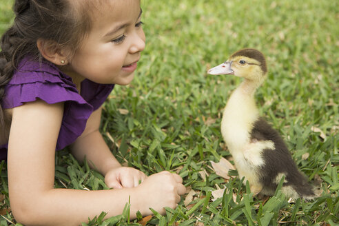 A young girl on the grass looking closely at a young duckling. - MINF03016