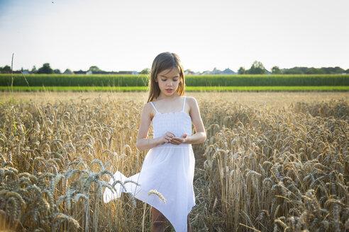 Portrait of little girl standing in wheat field - LVF07358