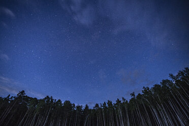 Russia,, Amur Oblast, Starry sky over forest - VPIF00426