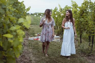 Young women walkig in vineyard, having a picnic, drinking wine - MAUF01639