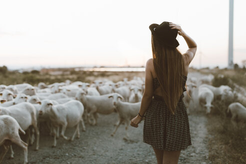 Back view of young woman walking in front of flock of sheep - OCAF00347