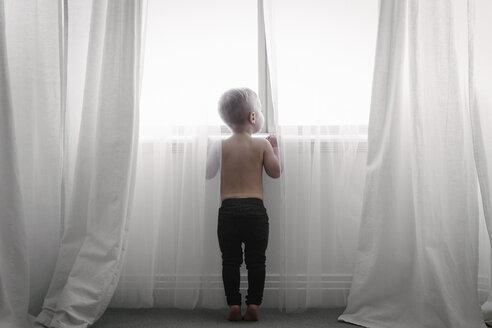 A child standing at a window looking out through the net curtains. Back view. - MINF03689
