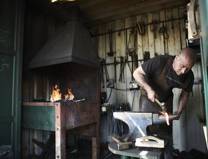 Blacksmith shaping a hot piece of iron on an anvil in a traditional forge with an open fire. - MINF03968