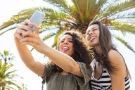 Two playful female friends taking a selfie under a palm tree - WPEF00748