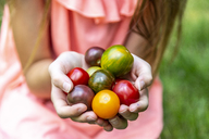 Girl holding colorful tomatoes in hand - SARF03873