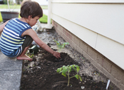 A boy, child planting plants in a flowerbed. - MINF05029