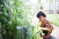 A boy, child crouching by a vegetable plant. - MINF05056