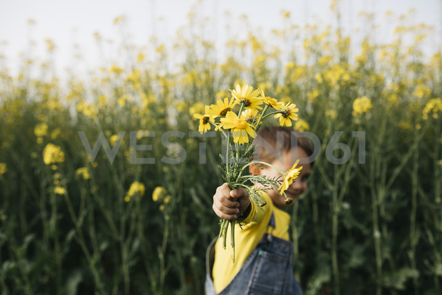Little boy's hand holding picked yellow flowers in front of rape field - JRFF01779 - Josep Rovirosa/Westend61