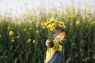Little boy's hand holding picked yellow flowers in front of rape field - JRFF01779