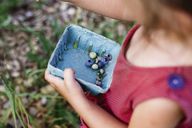High angle close up of child holding punnet of fresh blueberries. - MINF05226