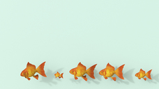 3D rendering, Row of different goldfish on green background - UWF01462