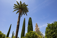 Spain, Andalusia, Cordoba, Torre del Alminar of Mosque–Cathedral and palms - WIF03545