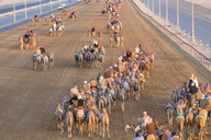 High angle view of people riding on camels with colourful saddles along a dusty road. - MINF06561